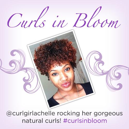 curlsinbloom_winner2_blog